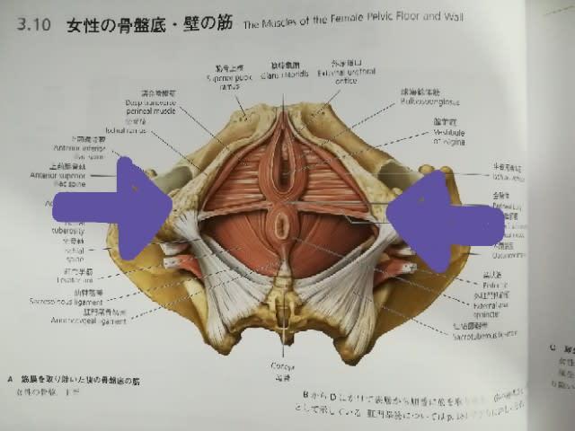 筋 群 底 骨盤