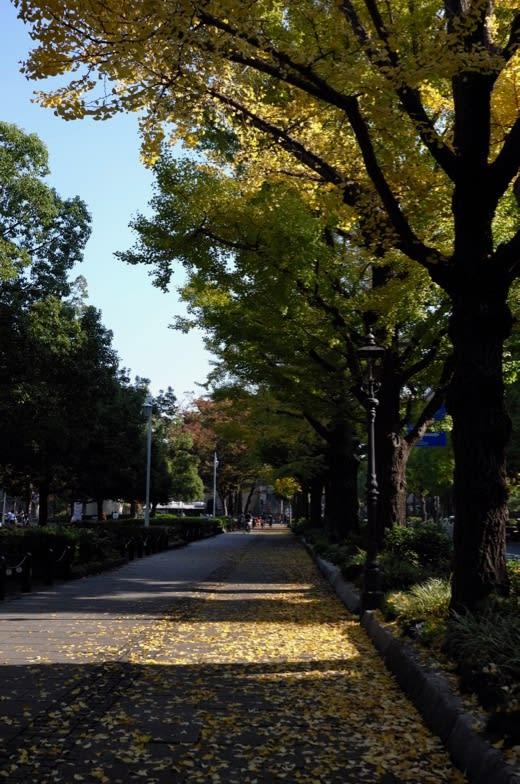 山下公園通りの銀杏並木と山下公...