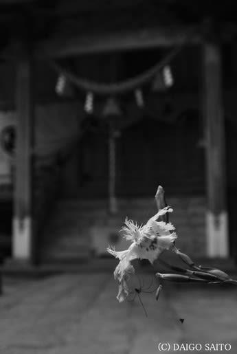 花に宿るクモ