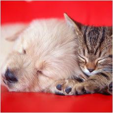 「猫と犬、どっちが好きですか? ←この記事」の質問画像