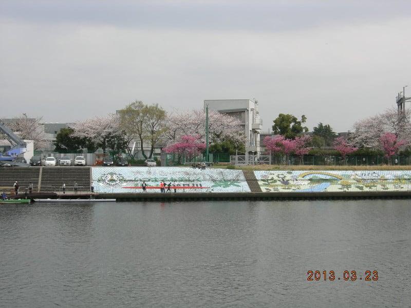 130323_tsurumi_sakura