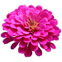 フリー素材 花アイコン 256x256 50種88個 Nekotopな