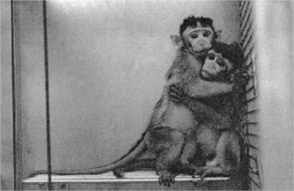 医薬品動物実験企業に虐待・データ改ざんの疑い浮上 - 「新日本科学」 事実上の取材拒否 - NPO個人ケイ&リルこの世界のために 全日本動物愛護連合 アニマルポリス 動物愛護党