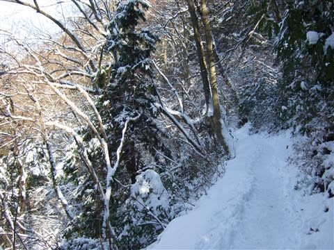 尾山 雪 高