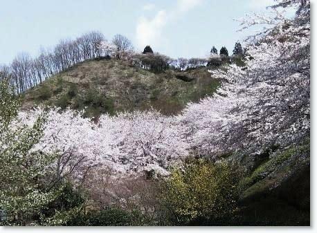 Sakura1_4