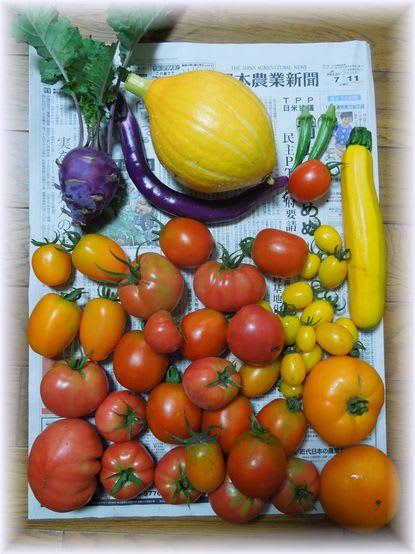 採れたて野菜 2012年7月11日