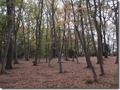 (1)「独歩の森」の黄葉と落葉