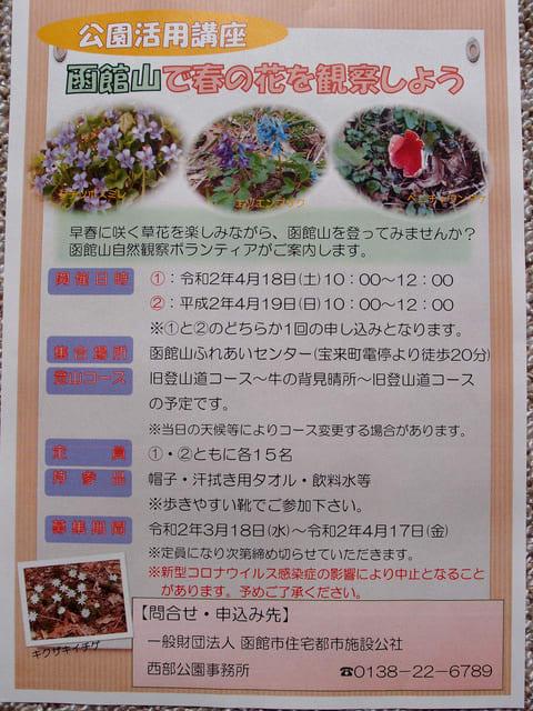 函館山で春の花を観察しよう