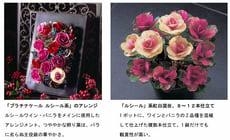20081113_tai1thumb1