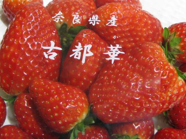 こと か いちご 【楽天市場】奈良産 古都華イチゴ(ことかいちご)小粒