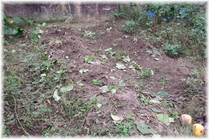 茄子跡地 2010年10月31日