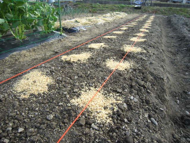 方 じゃがいも の 植え じゃがいもの育て方|種イモの植え方、植える時期は?プランター栽培もできる?|🍀GreenSnap(グリーンスナップ)