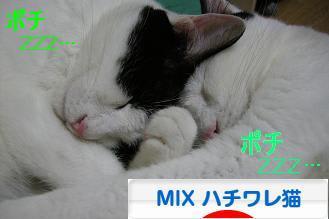にほんブログ村 猫ブログ MIXハチワレ猫へ