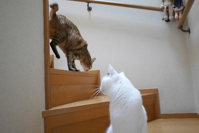 猫の手かします<ニャパレン>