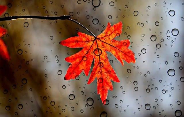 雨に濡れ 末期の化粧 冬紅葉 殿 - 575の会