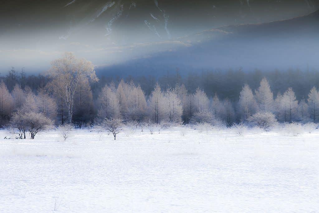 小田代ヶ原の霧氷