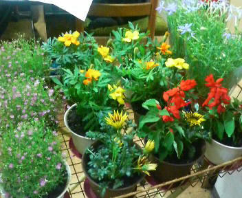 今月の花キャンペーン