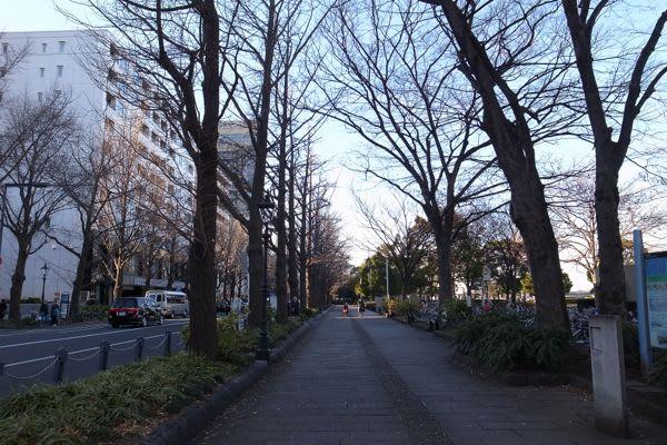冬の山下公園通り。 - Mr.小太郎