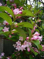 庭で咲いた花です。