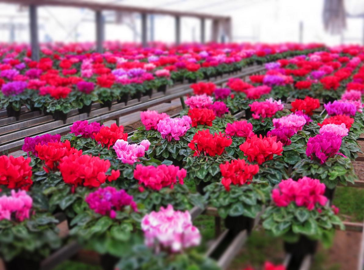 三浦園芸   Garden202のブログ