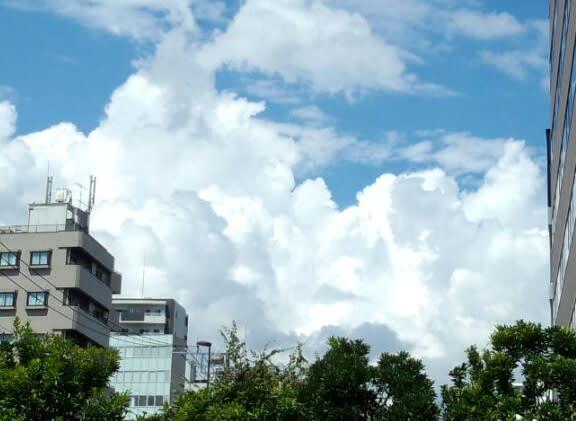 今日も雲が増えてきました