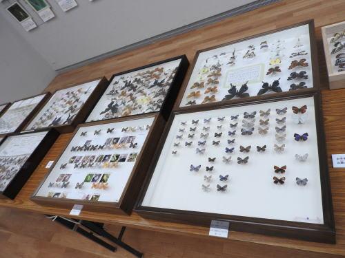 白金町会自然観察会15周年記念「蝶と楽しい仲間達展」