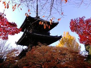 京都、真如堂に来ています。