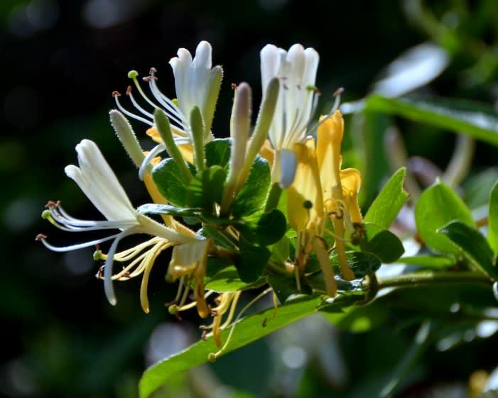 花 しらべ【植物】