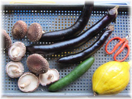 採れたて野菜 2010年10月29日