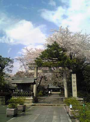Shoinsakura