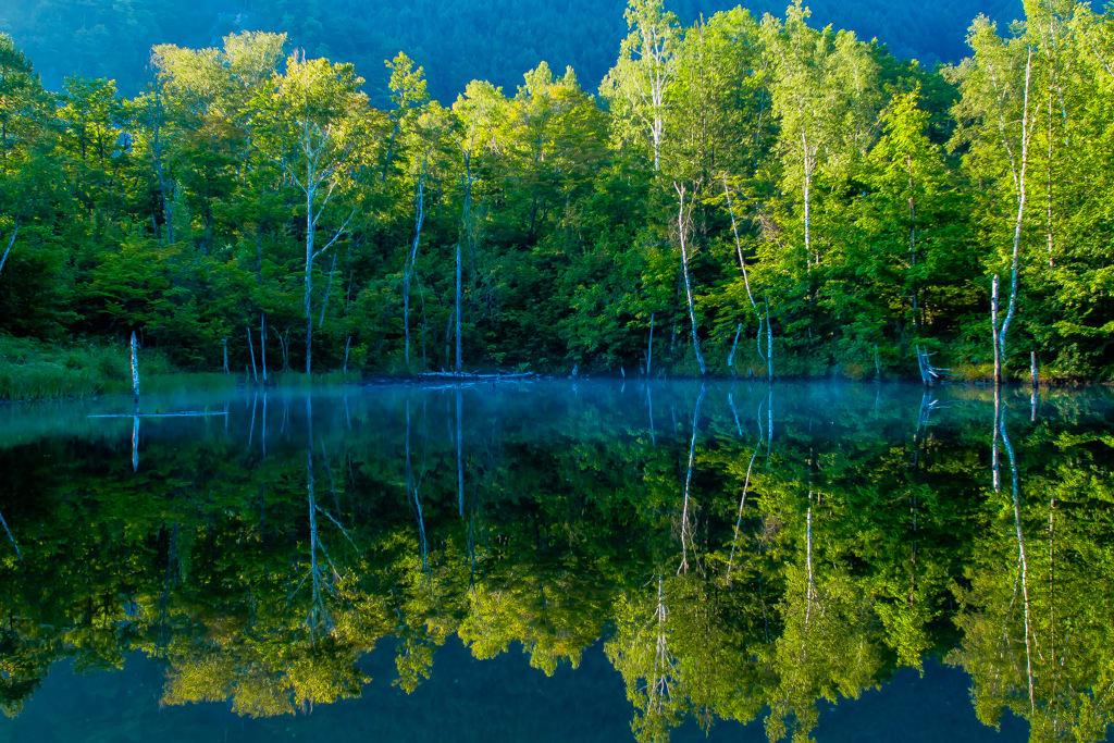 まいめの池/夏の写真