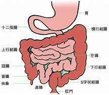 どっち 左 盲腸 右