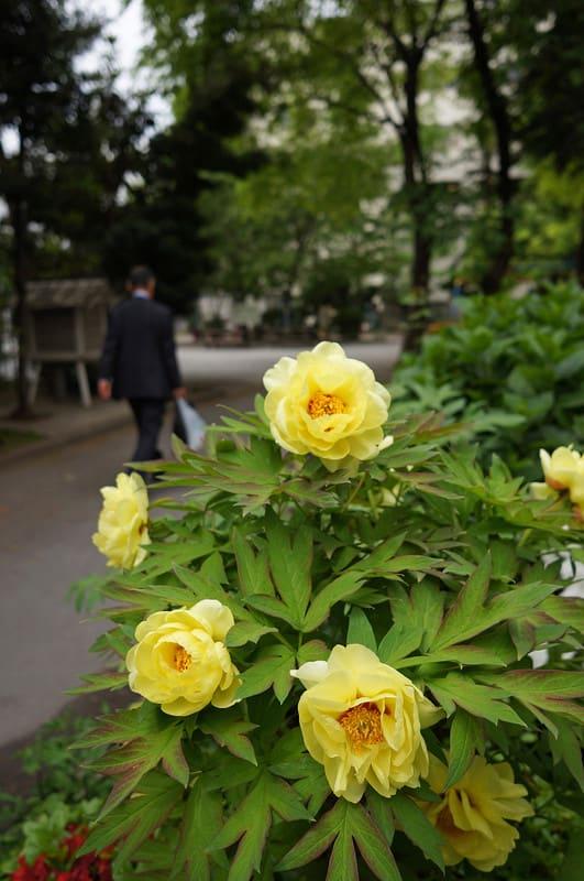 Tokyo140408