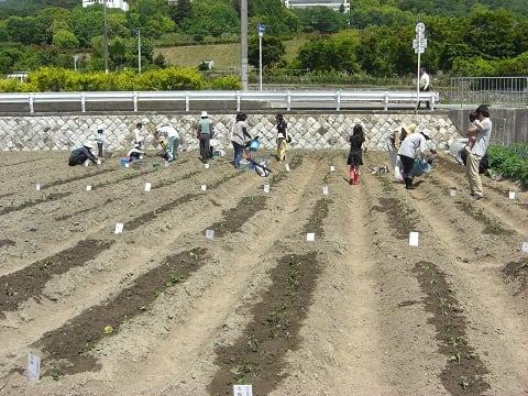 水やり後の畑