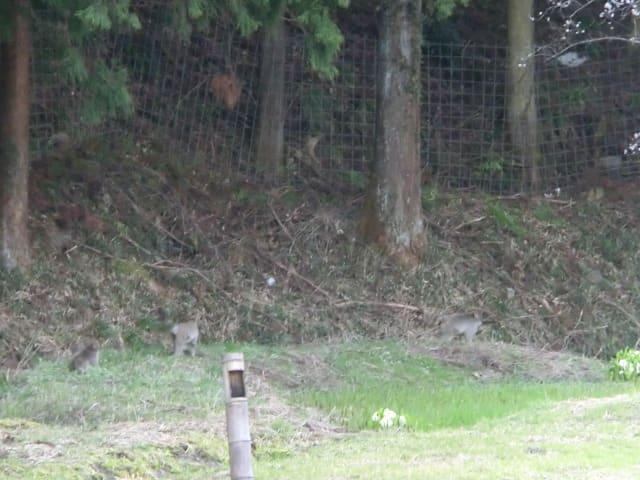 堀にいたサル