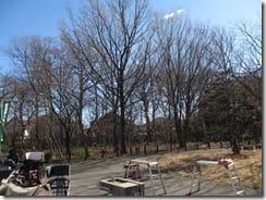⑤落葉樹が広がる境山野緑地