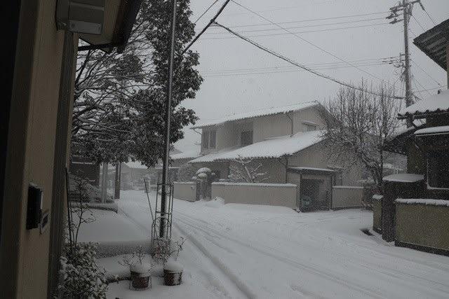 大雪警報です~☆
