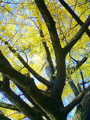 狭山湖の紅葉