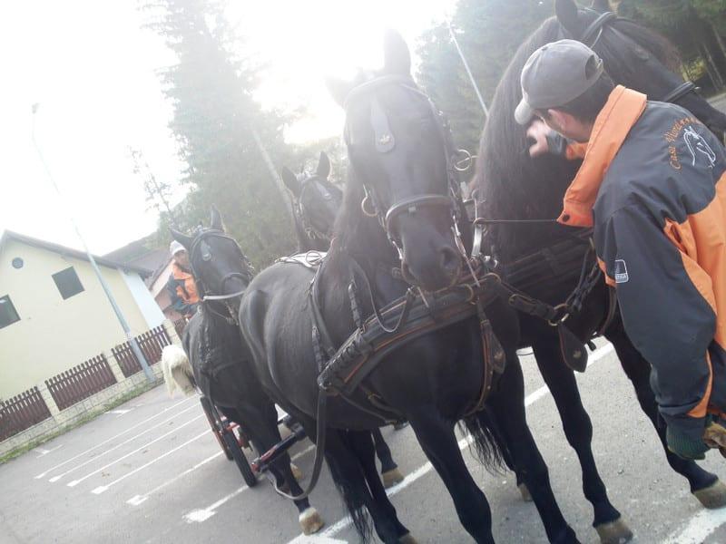 131103_horse07