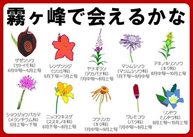 子供向けイラストパンフレットお花編つくりました 霧ヶ峰自然保護