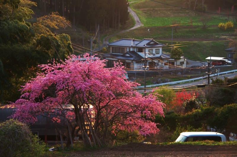 春たけなわの坂道、 - 南三陸 海...