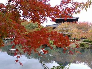 東寺の庭園に来ています。