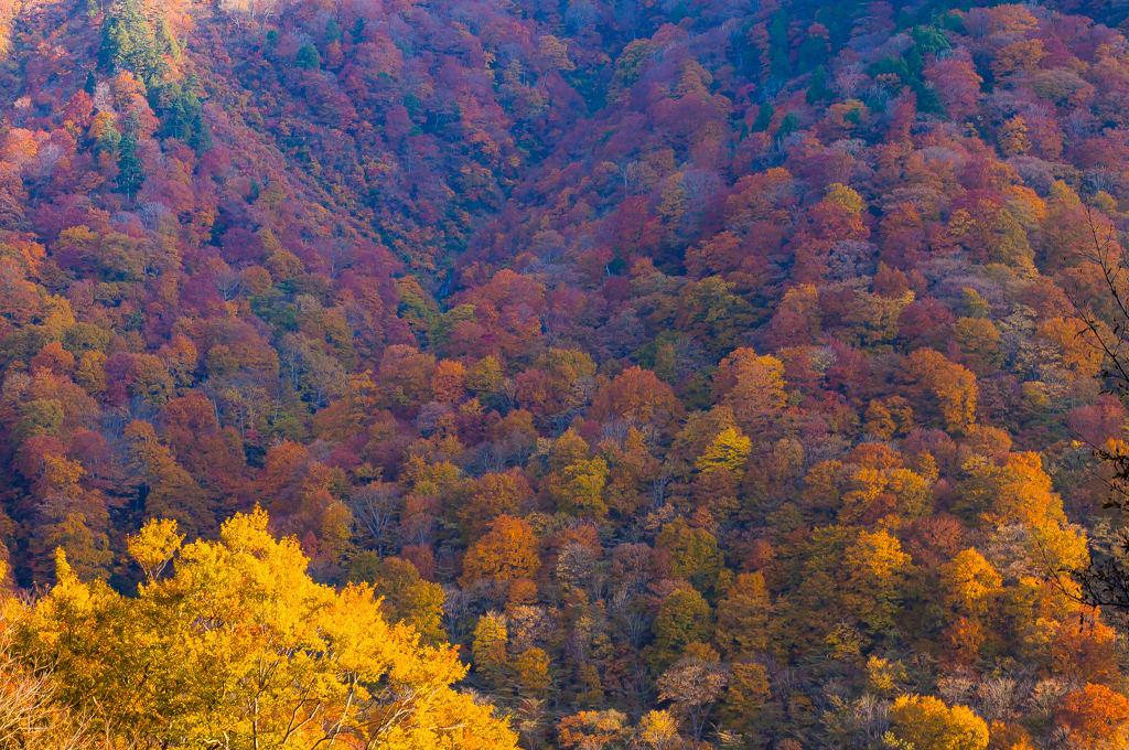 湯檜曽の紅葉