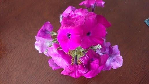 越谷 世界 に 一 つ だけ の 花