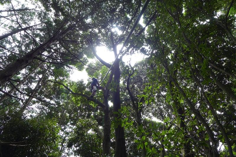 Monkey_tree_fukinagashi