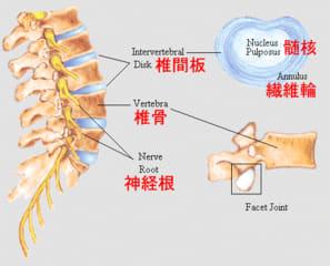 胸 腰椎 圧迫 骨折