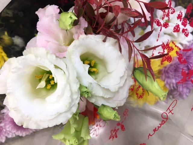 2017年10月のブログ記事一覧-西尾治子 のブログ Blog Haruko Nishio ...