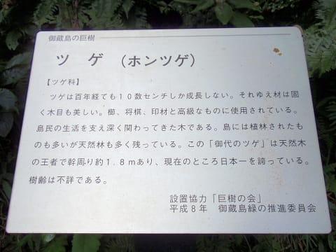 0056mikura08