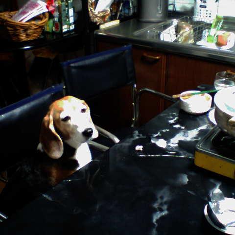 今日は楽しい鍋の日だ~!