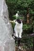 gatto-libero